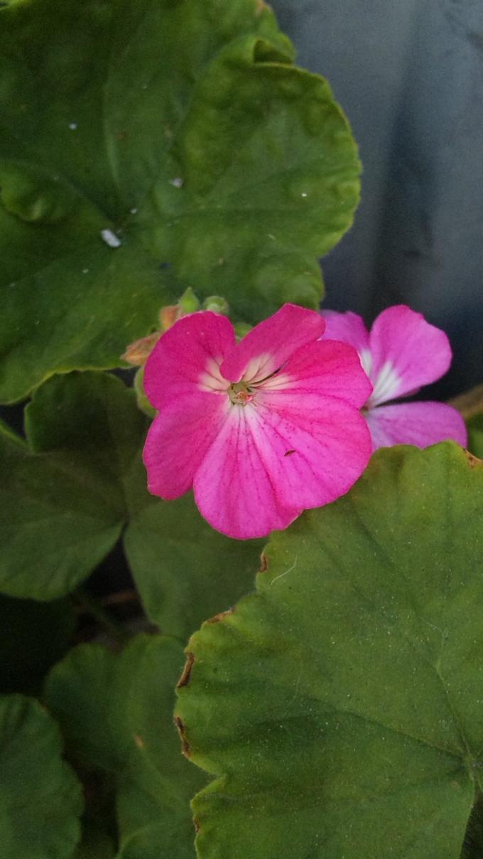 Flower_20111005