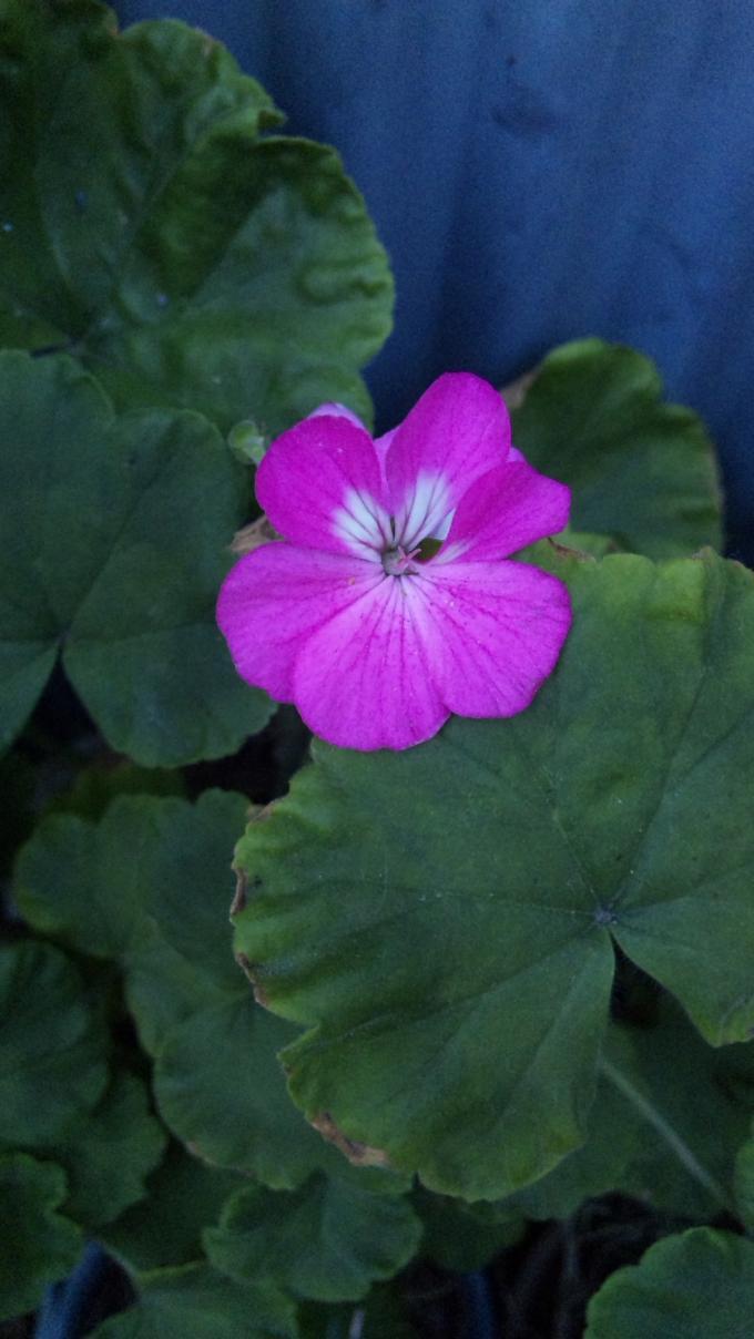 Flower_20111007