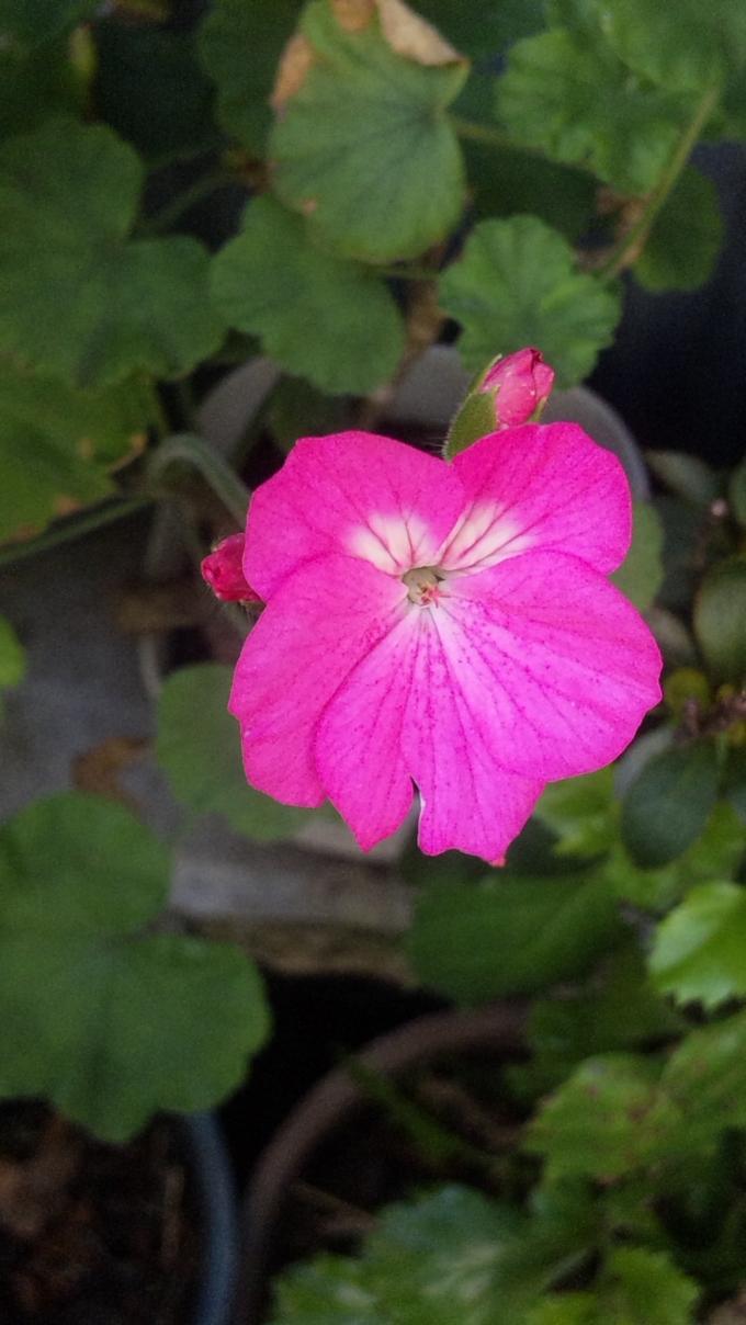 Flower_20111010