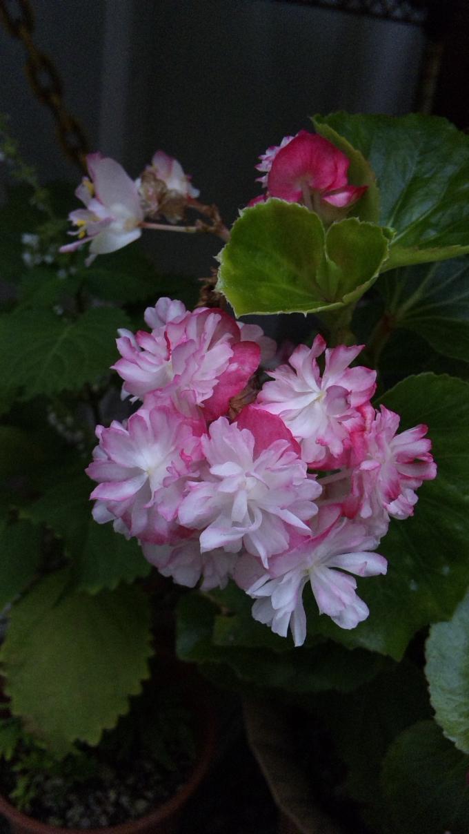Flowers_20111023
