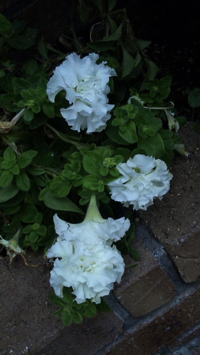 Flowers_20111021