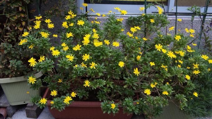 Flowers_20111022