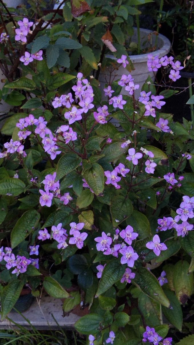 Flowers_20111026