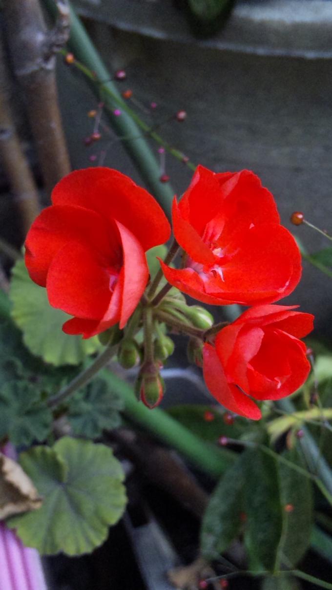 Flowers_20111018