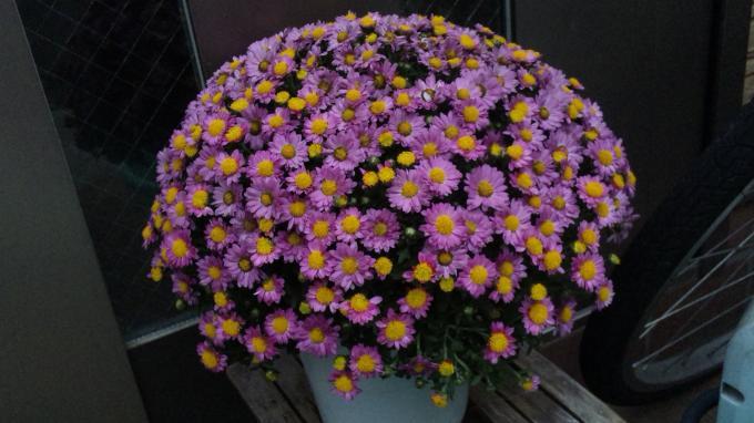 Flowers_20111019