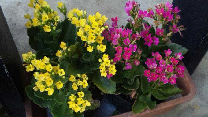 Flowers_20110929