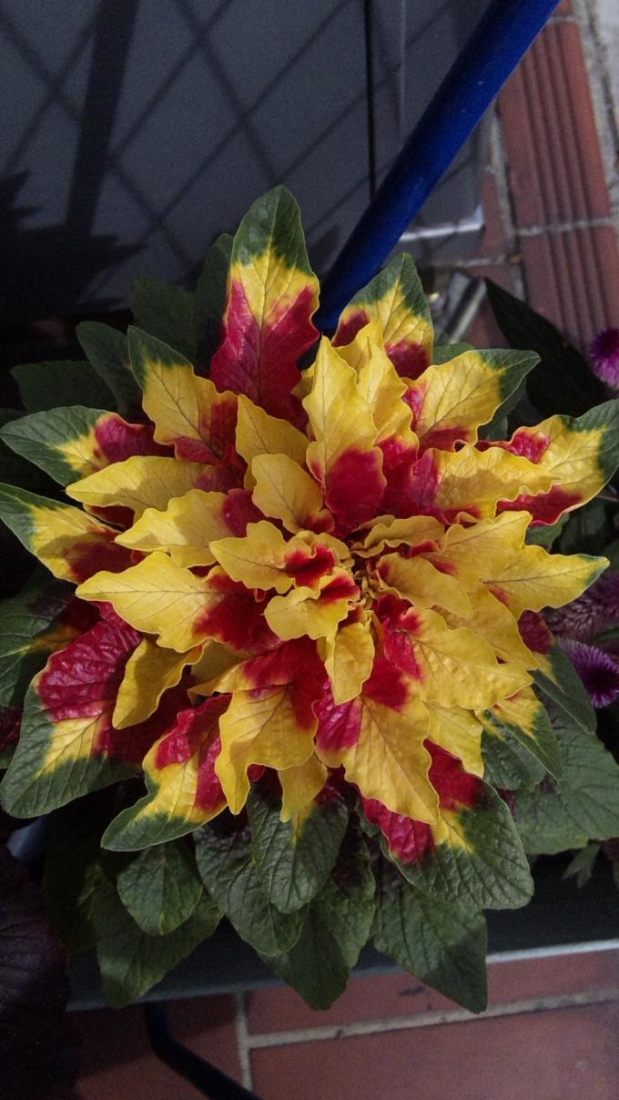 Flowers_20110928