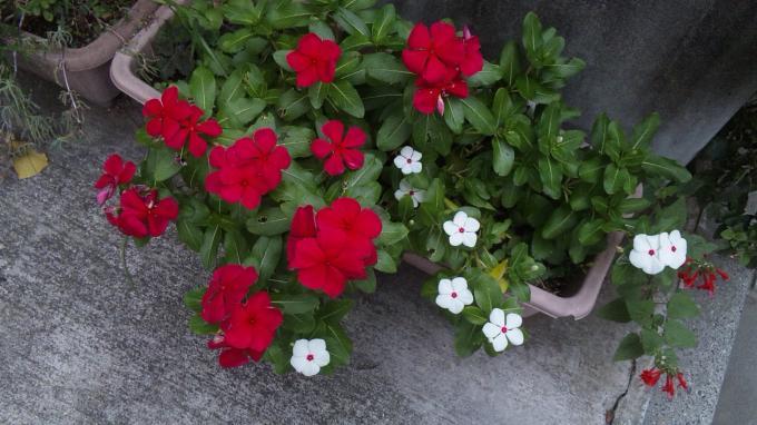Flowers_20111001