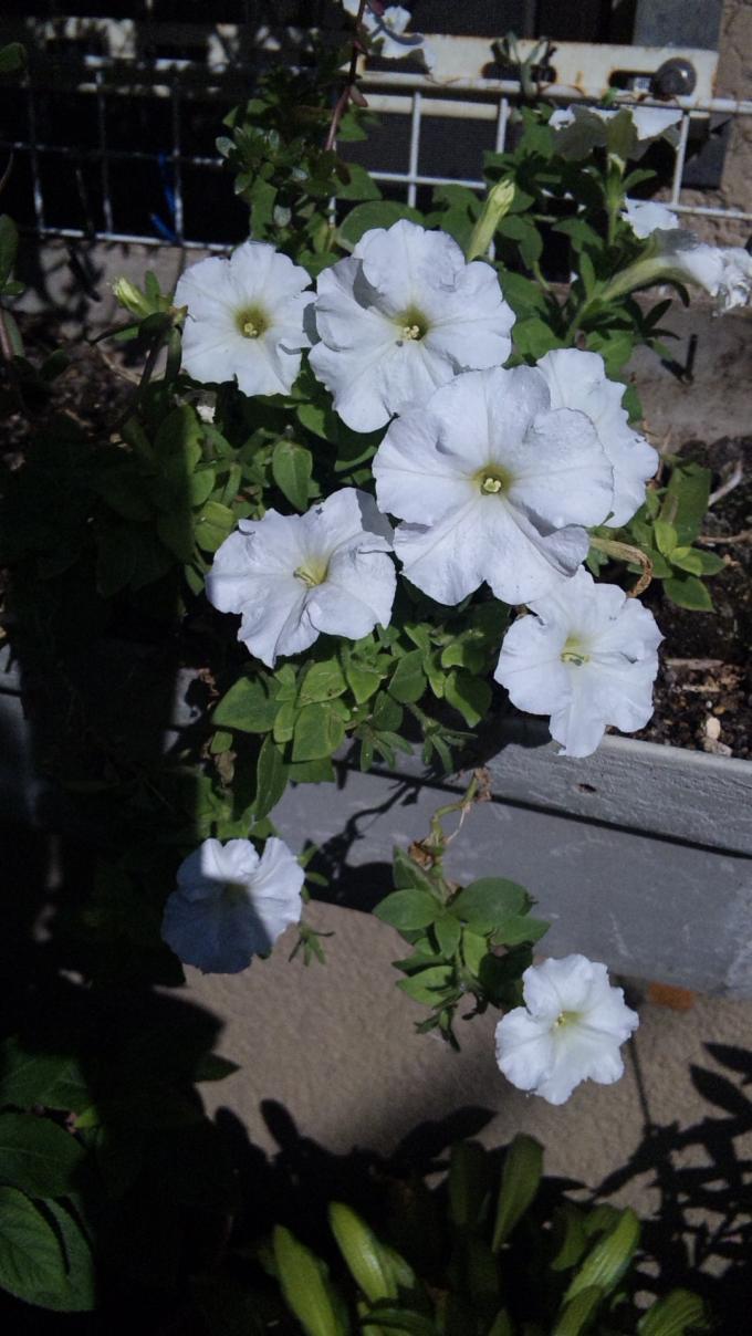 Flowers_20111006