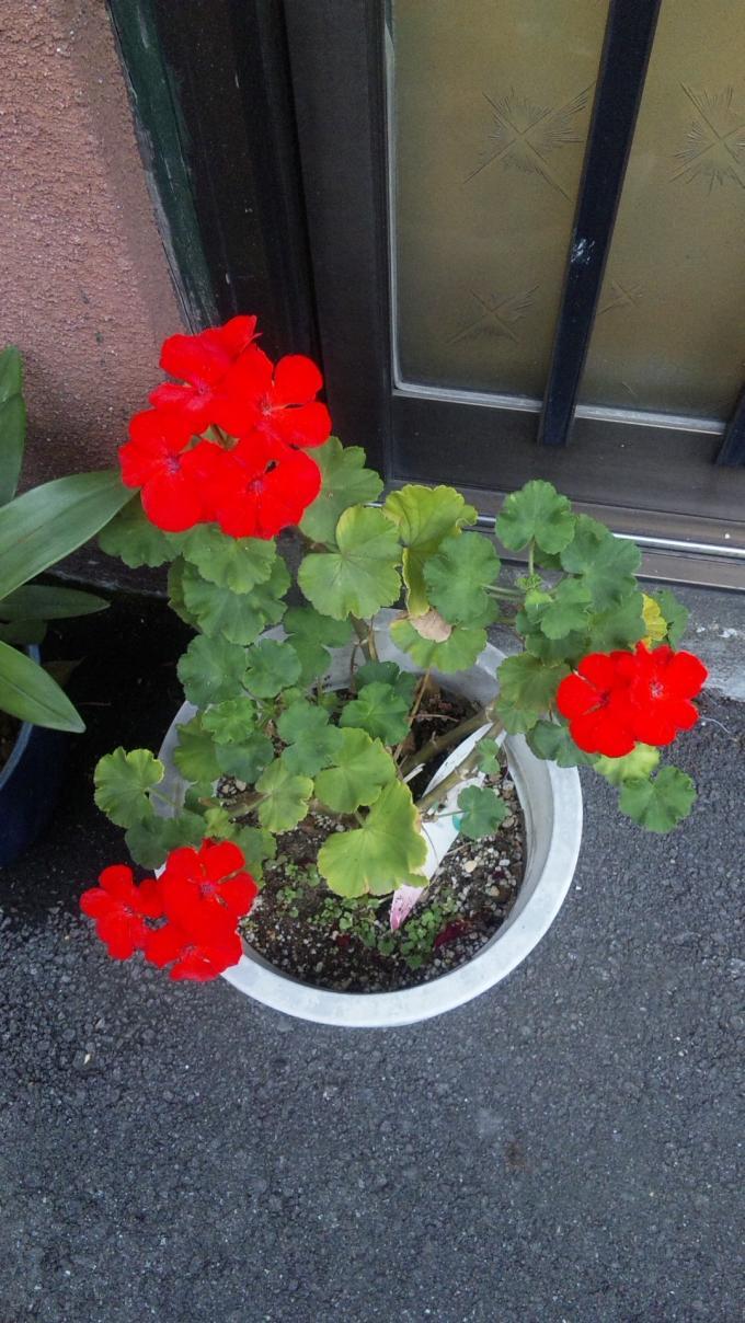 Flowers_20111010