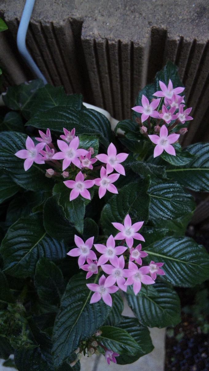Flowers_20111013