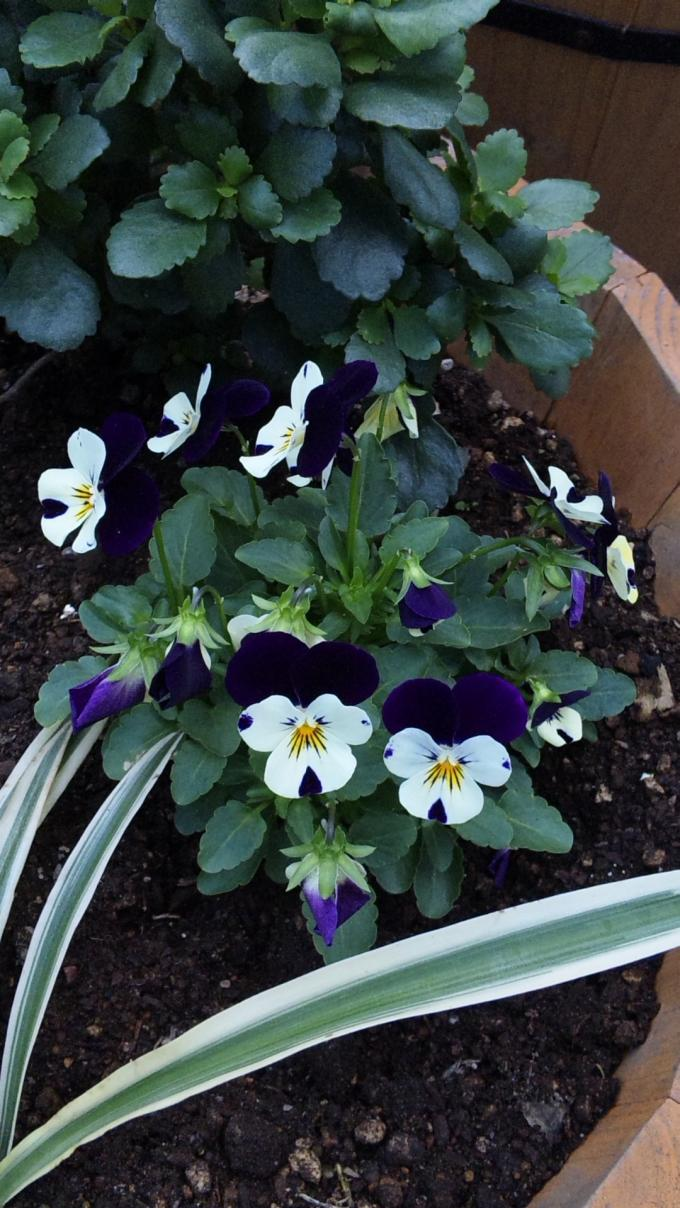 Flowers_20111012