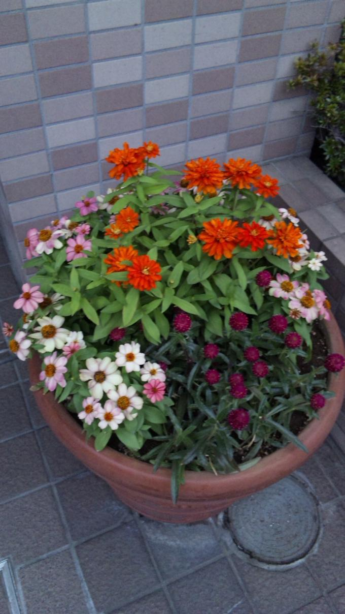 Flowers_20111014