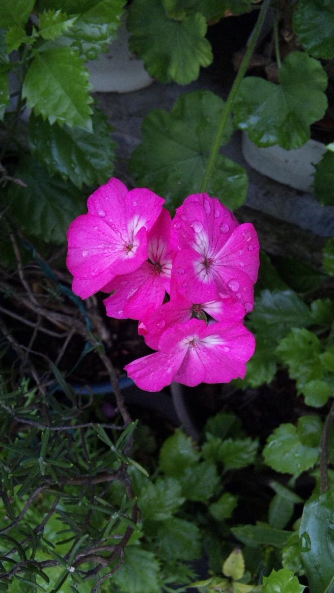 Flowers_20111017