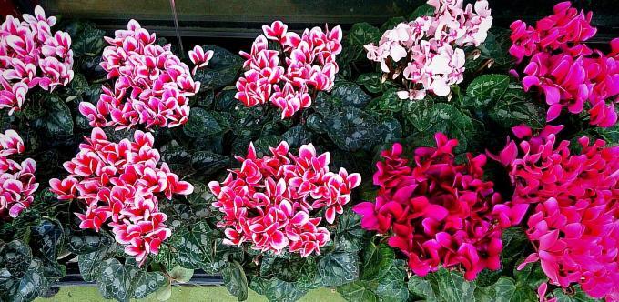 Flower_20141120