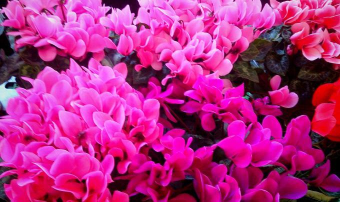 Flower_20141217