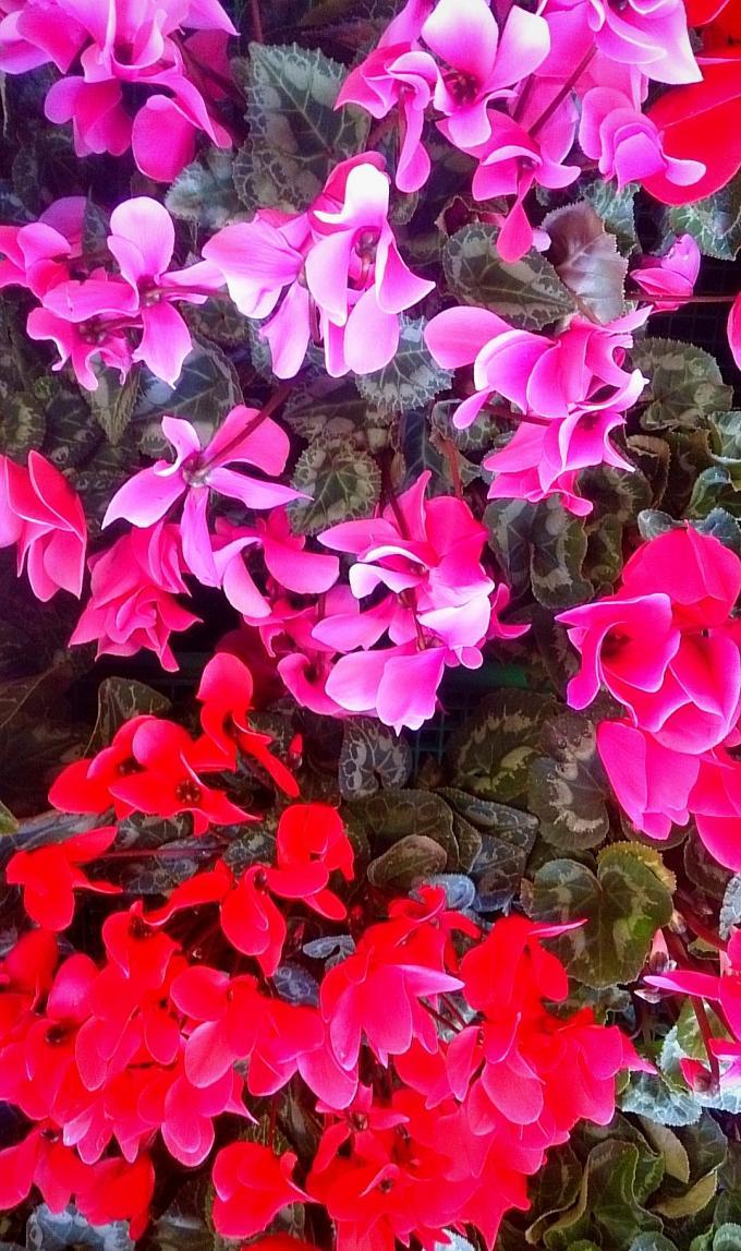 FLOWER_20141207