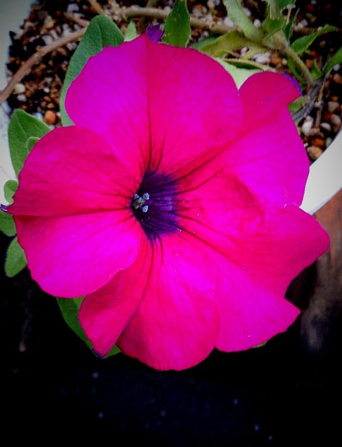 Flower_20141205