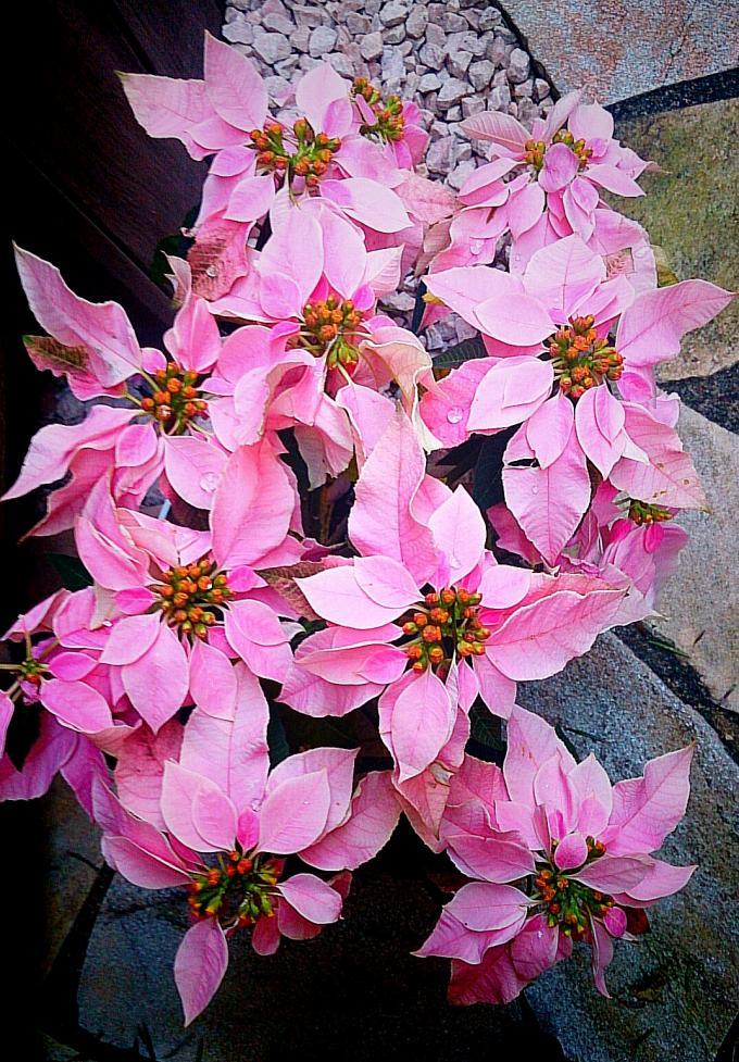 Flower_20141213