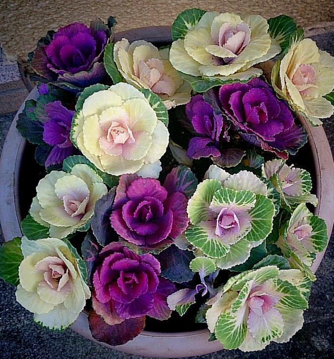 Flower_20141209