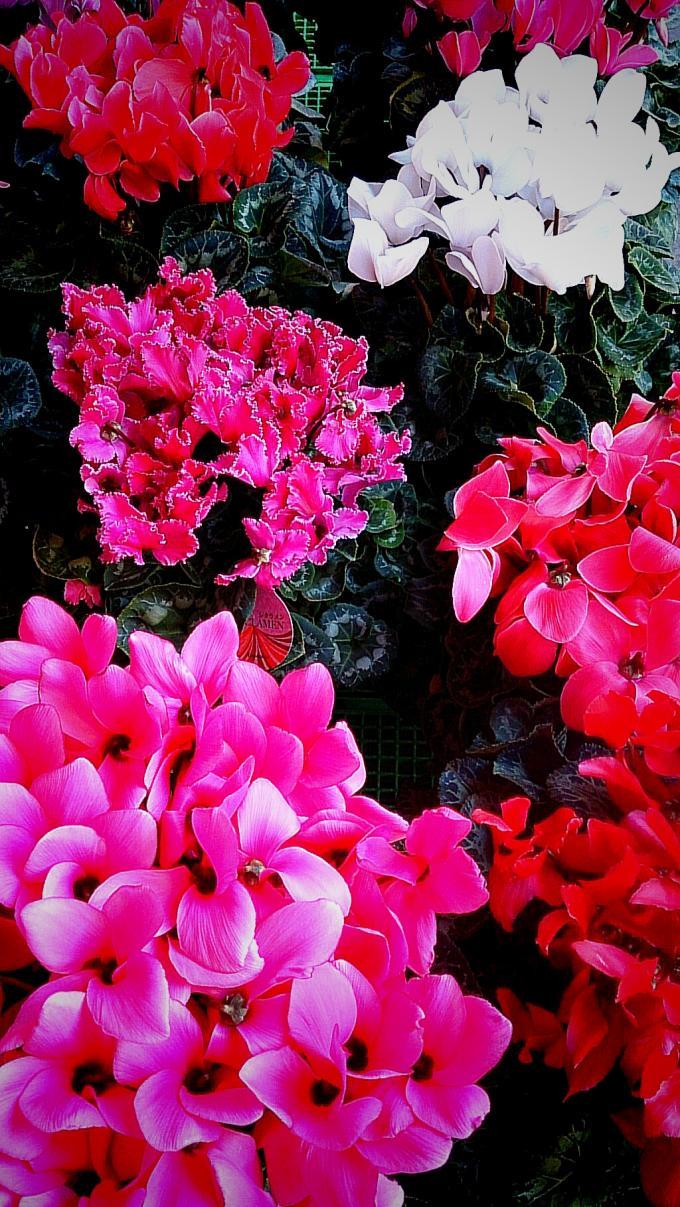 Flower_20141219