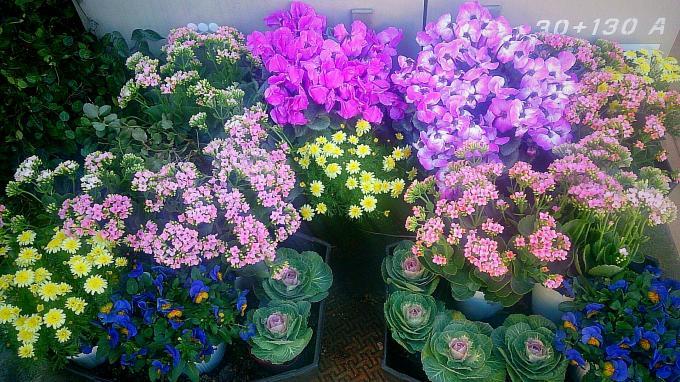 Flower_20141226