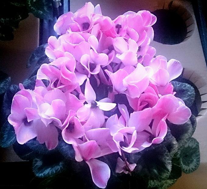 Flower_20141228