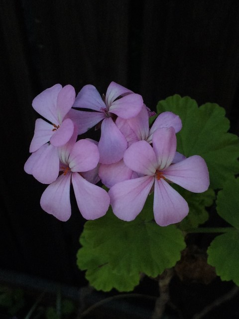 Flowers_20111008