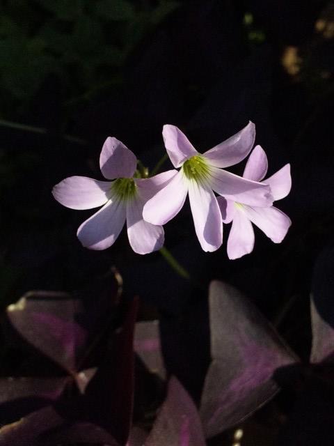 Flower_20111008