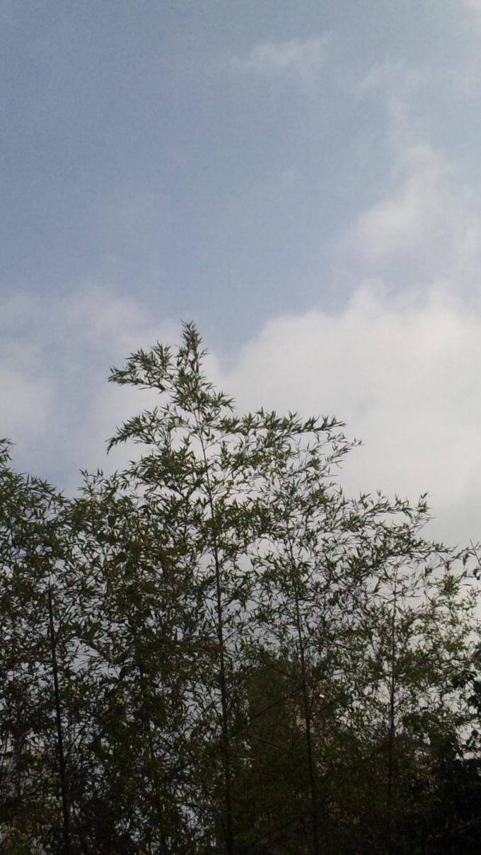 SKY_20111012