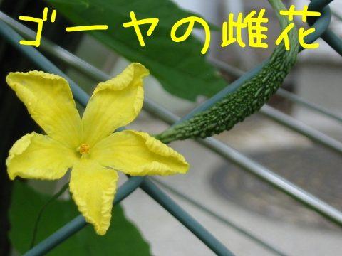 201307028.jpg