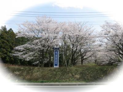 桜2013-7