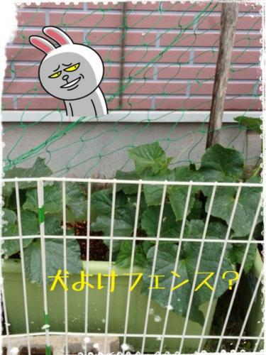 野菜泥棒2