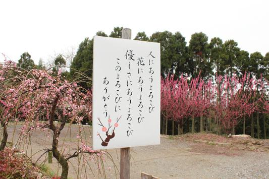 120320臥龍梅 (39)のコピー
