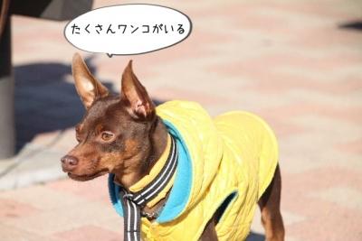 2013_11_23_9999_95.jpg