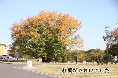 2013_11_23_9999_96.jpg