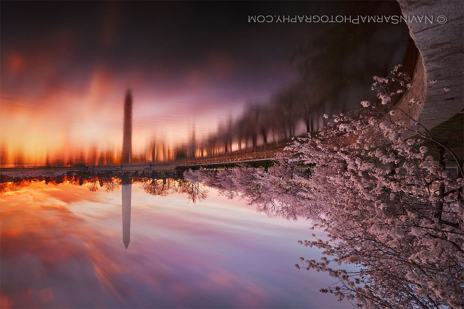 cherry_blossom_washington_dc_sunrise.jpg