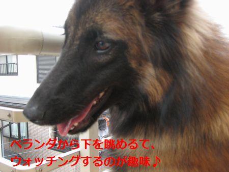 028_20111010010552.jpg