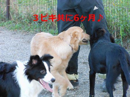 053_20111026235401.jpg