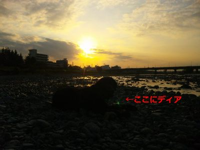 多摩川ディア7