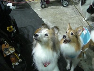 2011.9.23 ヴィヴィアンちゃん&メイちゃん
