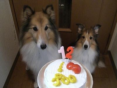 2011.10.5 fooちゃん誕生日ケーキ食いつく