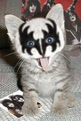 KISS猫