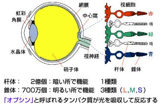 eye_model.jpg