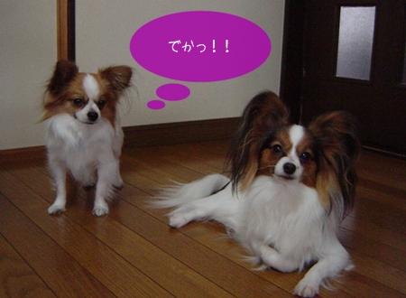 2004_01-01.jpg