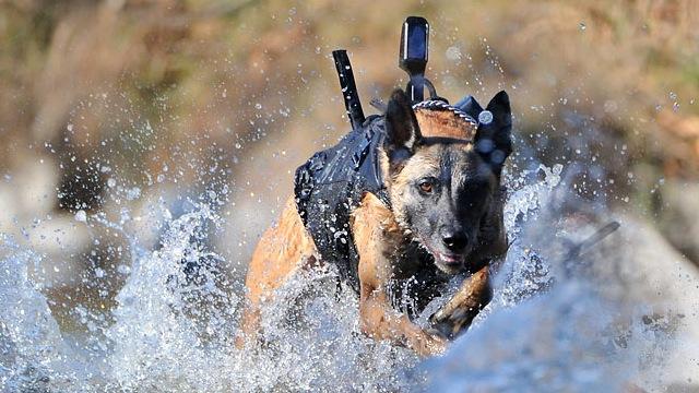 dogP1.jpg