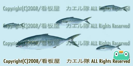 お魚テクス見本「はまち」