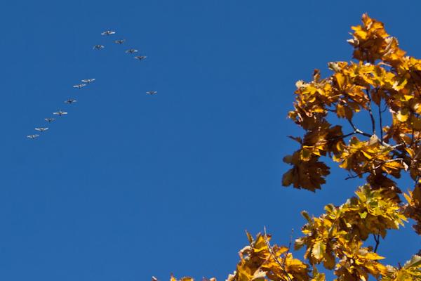 渡り来る 2007/10/24撮影