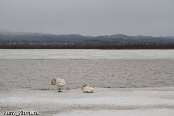 増水した湖
