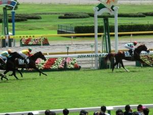 サンマルティン 2着馬との差